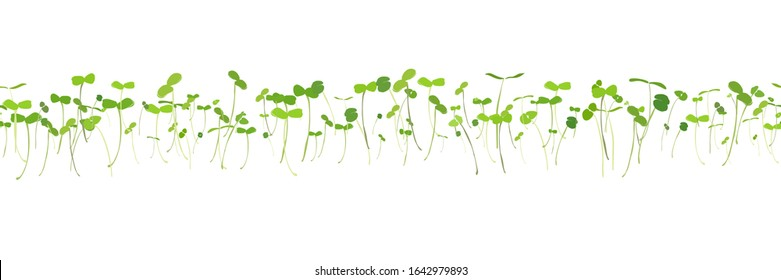 Horizontal seamless pattern of young shoots microgreen. Fresh young sprouts . Microgreen healthy food. Vegetarian food.  Raw sprouts, microgreens, healthy eating concept Vector illustration