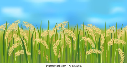 Horizontal seamless rice field with the blue sky / Realistic vector rice field in the harvesting time