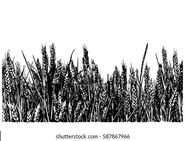horizontal seamless vector illustration of wheat field in old-fashioned hand drawn style.
