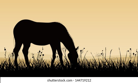 Horizontal vector illustration of horse grazing in the meadows at sunset (twilight).