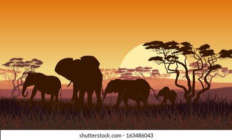Horizontal vector illustration of wild elephants in African sunset savanna with trees.