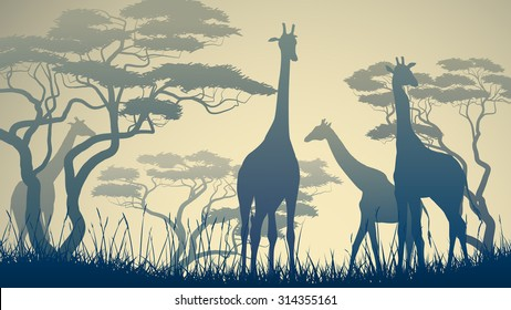 Horizontal vector illustration of wild giraffes in African savanna with trees.