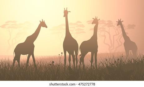 Horizontal vector illustration of wild giraffes in African savanna with trees.