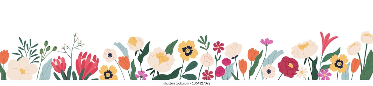 Horizontal white banner or floral backdrop decorated with gorgeous multicolored blooming flowers and leaves border. Spring botanical flat vector illustration on white background