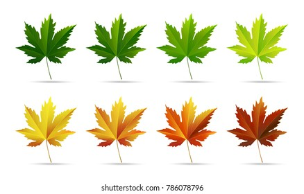 Horizontal white isolated background with autumn colorful maple leaves. Vector illustration.