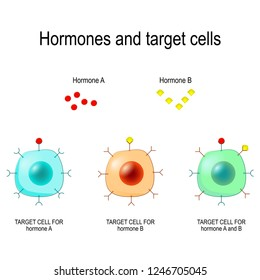 Hormones, Receptors and Target Cells. each type of hormone is designed only certain cells. These cells will have receptors on them that are specific for a certain hormone. Vector illustration