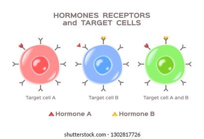 hormones, receptors and target cells vector