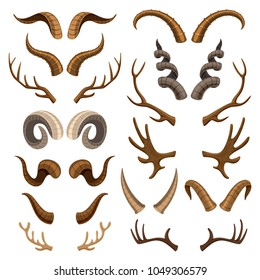Horn vector horned wild animal and deer or antelope antlers illustration set of horny hunting trophy of reindeer isolated on white background