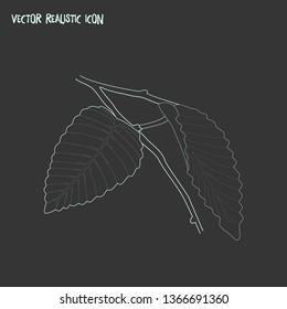 Hornbeam leaf icon line element. Vector illustration of hornbeam leaf icon line isolated on clean background for your web mobile app logo design.