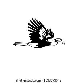 hornbill black white vector