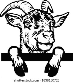 Horned goat - Cheeky Goat peeking out - face head isolated on white - vector stock