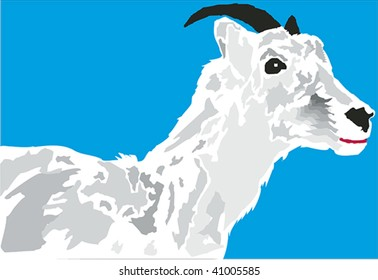 Horned mountain goat in profile.