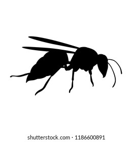Hornet silhouette vector. Insect in black and white concept.
