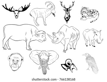 horns hooves deer elk bull cow