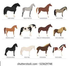 Horse breeding isolated icon set with mustang, paso, pinto stallion. Farm animal. Flat design. Vector illustration