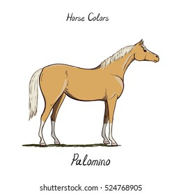 Horse color chart on white.  Equine coat colors with text. Equestrian scheme. Palomino type of horse. Vector hand drawn illustration.
