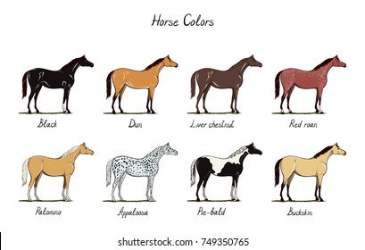 Horse color chart set.  Equine coat colors with text. Types of horses black, dun, chestnut, red roan, palomino, appaloosa, buckskin. Equestrian scheme. Vector cartoon hand drawn illustration.