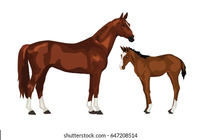 Horse and colt vector illustration, isolated on white background.