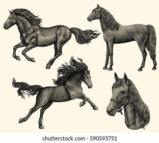 Horse. Design set. Hand drawn engraving. Vector vintage illustration. Isolated on color background. 8 EPS