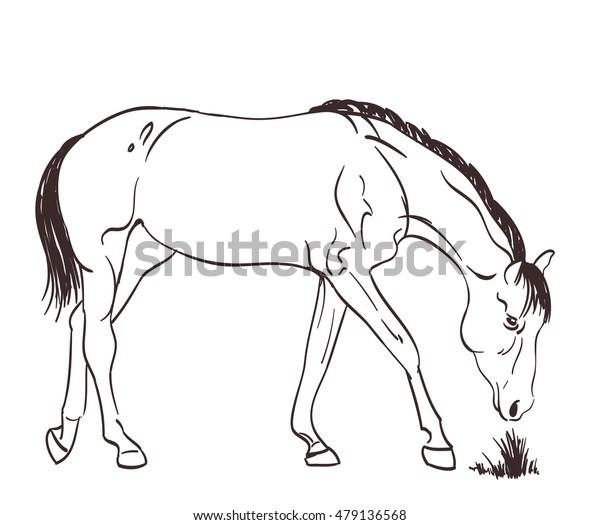 a horse eating grass. sketch  vector illustration