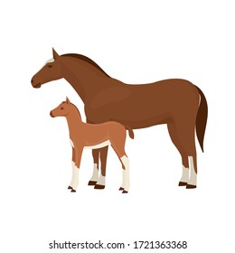 Horse with foal vector illustration isolated on white background. Farm animal.