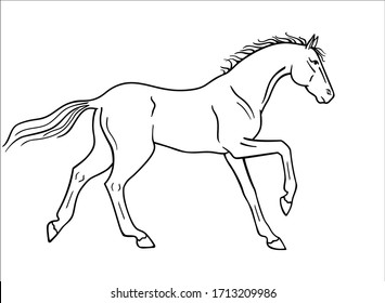 Horse galloping - vector linear picture for coloring. Outline. Hand drawing. A horse in a canter center, phase with support on two legs. Fine, thoroughbred prancing stallion.
