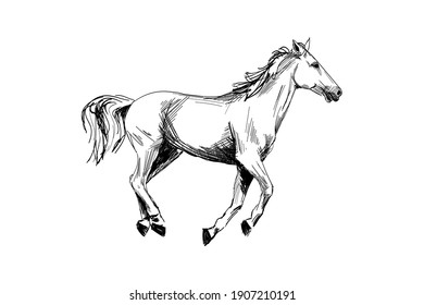 Horse hand drawn sketch. Running horse black graphic sketch isolated on white background. Vector illustration