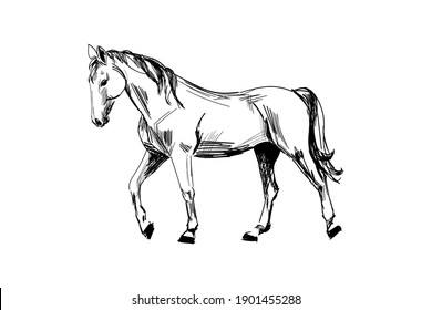 Horse hand drawn sketch. Walking horse black graphic sketch isolated on white background. Vector illustration