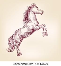 horse hand drawn vector llustration realistic sketch