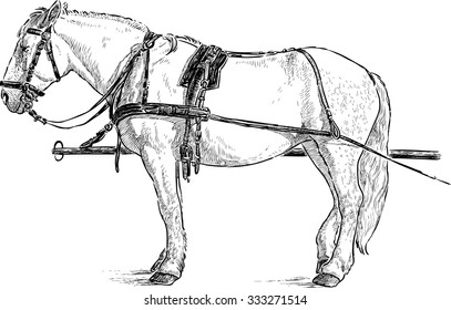 horse in the harness