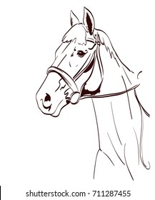 horse head vector illustration in line art style. equestrian theme drawing