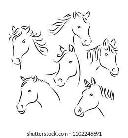 horse head vector line art style