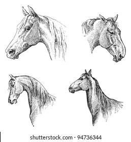 Horse head / vintage illustration from Meyers Konversations-Lexikon 1897