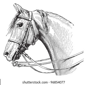 Horse head / vintage illustration from Meyers Konversations-Lexikon 1897