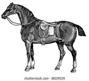 Horse. Imitation of an ancient engraving