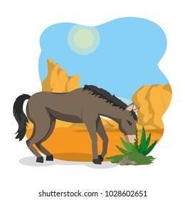 Horse on desert