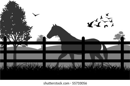 Horse on the grass illustration