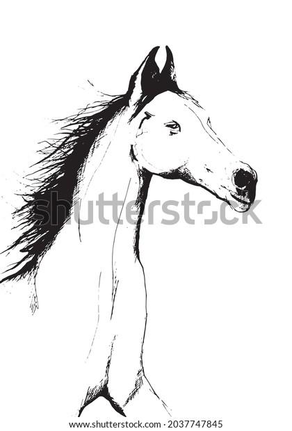 Horse portrait black and white line art tattoo style design illustration