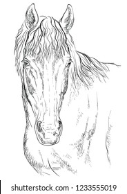 Horse portrait. Horse head in monochrome colors isolated on white background. Vector hand drawing illustration