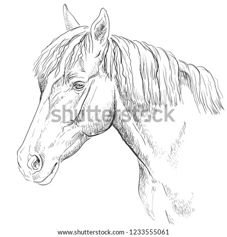 Horse Portrait Horse Head Profile Monochrome Stock Vector Royalty