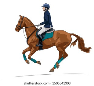 Horse riding. Female rider on a chestnut sport horse on a white background.