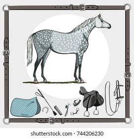 Horse and riding tack tools in leather belt frame. Bridle, saddle, stirrup, brush, bit, harness, whip equine harness equipments. Hand drawing cartoon vector equestrian sport equestrian background set.
