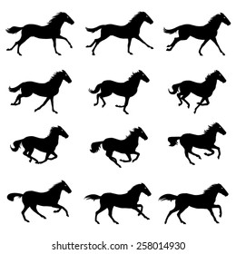 Horse Run Cycle