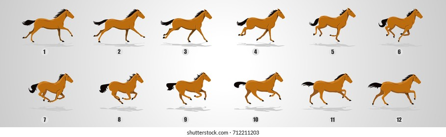 Horse Run cycle for animation