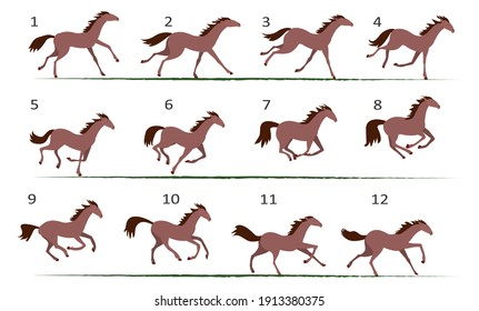 Horse running animation. Twelve key positions of horse running. Vector illustration isolated on white background.