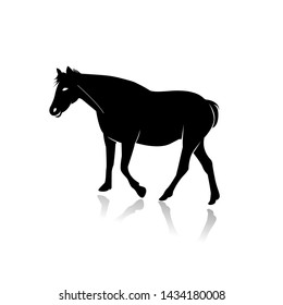 Horse Silhouette Isolated on White Background