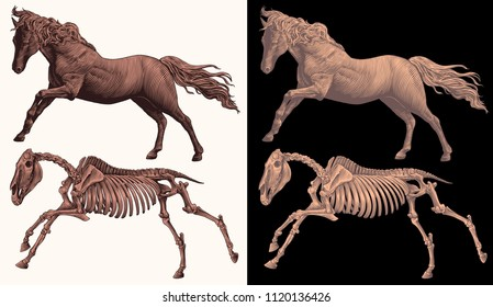 Horse and horse skeleton. Design set. Hand drawn engraving. Editable vector vintage illustration. Isolated on white and dark background. 8 EPS