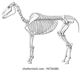 Horse Skull Images Stock Photos Vectors Shutterstock
