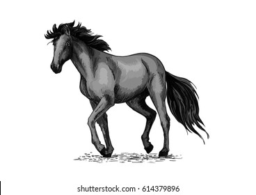 Horse sketch of black arabian stallion. Purebred racehorse or wild mustang walking a trot pace. Equestrian sport and horse racing themes or t-shirt print design