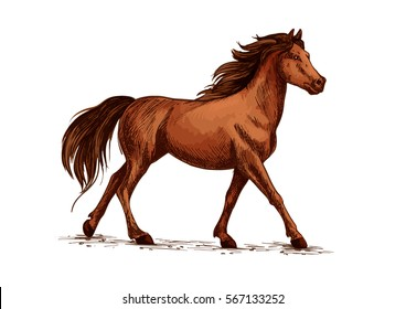 Horse stallion sketch. Wildlife mustang gait and domestic marish ambling, thoroughbred mare with hoofs on ground or racehorse gallop. Hippodrome, sport club and wild nature theme.